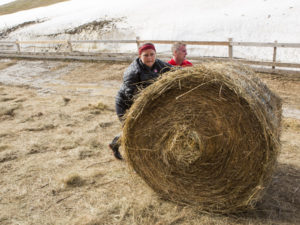 Canadian hay bales - much more manageable than a Swedish hay bale.