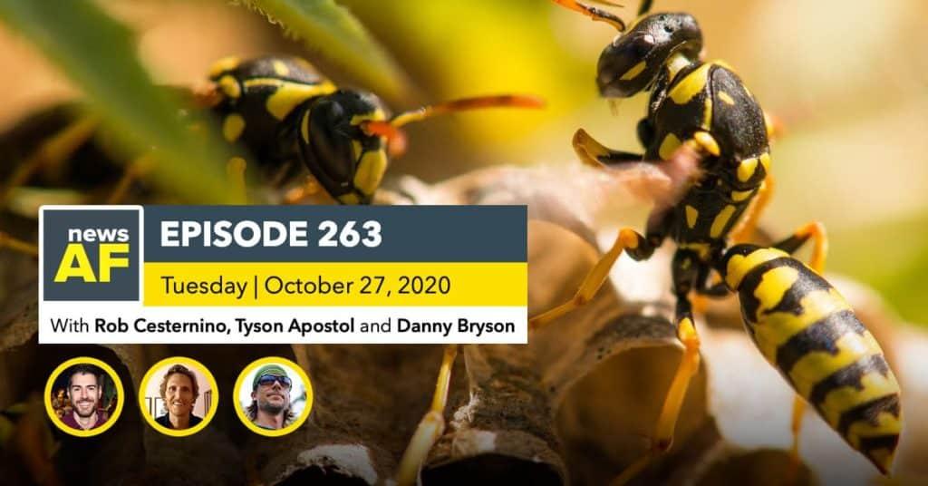 News AF | Murder Hornet Nest Found in the US is News AF - October 27, 2020